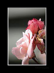 DSC_0027_framed.jpg
