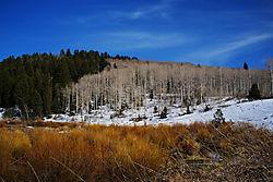 Aspen_and_trees.jpg