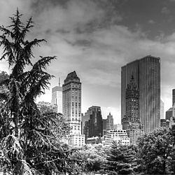 Central_park_B_W.jpg