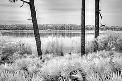 Gator_lake.jpg