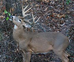 DeerFeeding.jpg