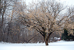 Tree_at_Watson_Fallsb.jpg
