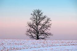 Winter_Tree_Sunset.jpg