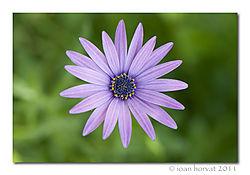 Flower_34.jpg