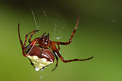 TN_Spider_2.jpg