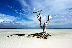 dead_tree_900w.jpg