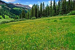 Wild-Flowers_NP.jpg