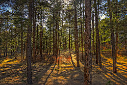 Forest_light_20090415.jpg
