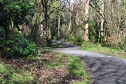 timberland-walk.jpg