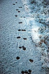 Trail_of_Paws.jpg