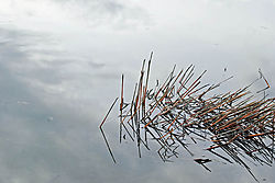 Winter_Reeds.jpg