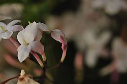 White_of_Pink_1051x698_4_2_mb.jpg