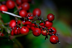 berries_wm.jpg