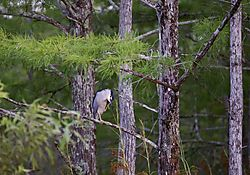 NIGHT_HERON2.jpg