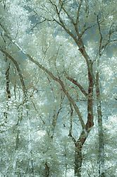 OCTOBER_TREES2.jpg