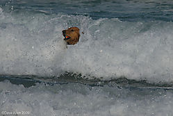 PG-Beach-Dog-2.JPG