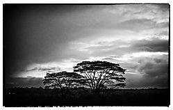 TREES_4163A.jpg