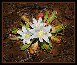 Zion_Flower_Framed.jpg