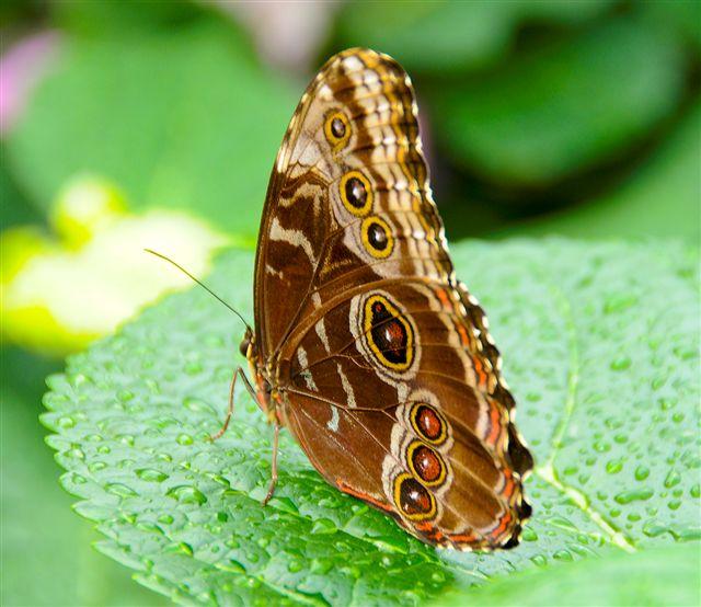 Butterflies_052