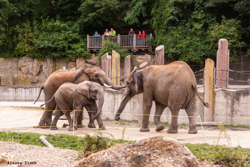 DSC_2731_2014_07_22_12_52_elephant_group_three_wild_animal_editorial_Vienna_01