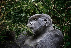 1-_Rwanda_ND51069.jpg
