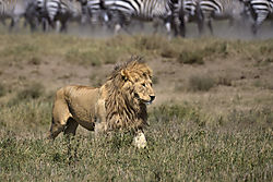 2-_Serengeti_ND51756.jpg