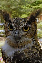 2007_5_298_Owl.jpg