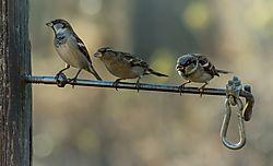 3_birds1.jpg