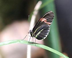 AMNH-Butterfly.jpg