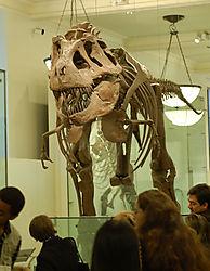 AMNH-TyranosaurusA.jpg