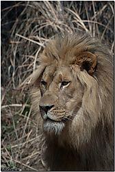Akron_Zoo_33.jpg