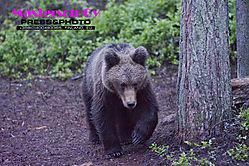 Bear_9046.jpg