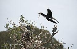 Bird135b1.jpg