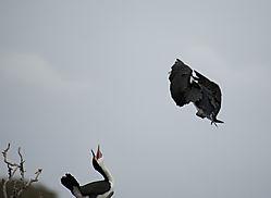 Bird191b1.jpg