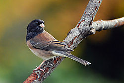 Bird29.jpg