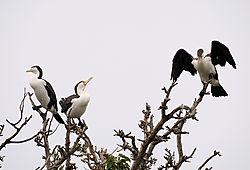 Bird30b1.jpg