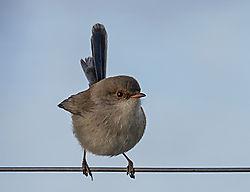 Bird_13_05_2020a.jpg