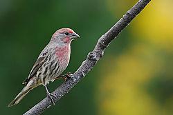 Bird_22.jpg