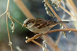 Bird_on_branch.jpg