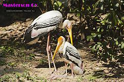 Birdlife-Birdlove