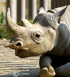 Brookfield_Zoo_2010-08-29_0006.jpg