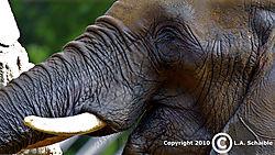 Brookfield_Zoo_2010-08-29_0009.jpg