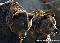 Brookfield_Zoo_2010-08-29_00251.jpg