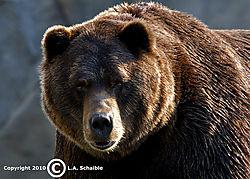 Brookfield_Zoo_2010-08-29_00261.jpg