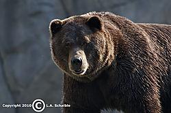 Brookfield_Zoo_2010-08-29_00421.jpg