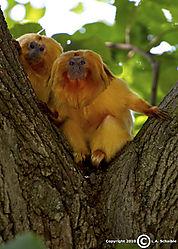 Brookfield_Zoo_2010-08-29_0060v21.jpg