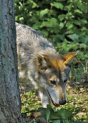 Brookfield_Zoo_2010-08-29_00881.jpg