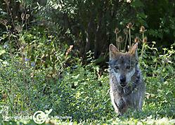 Brookfield_Zoo_2010-09-12_0191.jpg