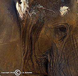 Brookfield_Zoo_2010-09-12_0237.jpg