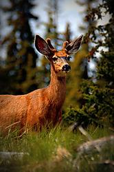 Buck_Buck.jpg